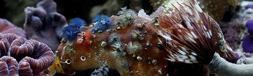 Acondicionadores para acuarios marinos exofauna for Acuario marino precio
