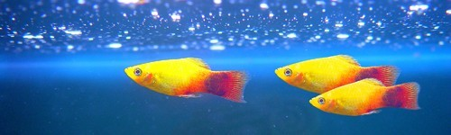 Comida para peces exofauna for Los mejores peces de agua fria
