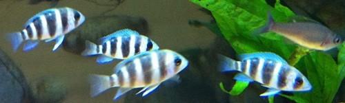 Comida para peces c clidos exofauna for Comida congelada para peces