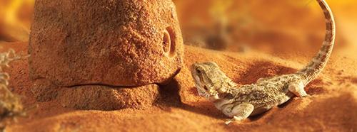 Comedero Termite Hill Exo-Terra