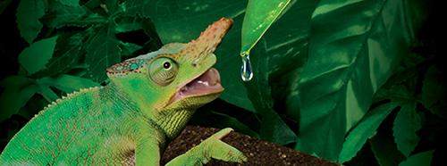 Exo-Terra Dripper Plant - Sistema de goteo para camaleones