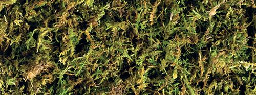 Exo-Terra Forest Moss