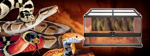 Kit de Inicio Exo-Terra para Terrarios de Serpientes