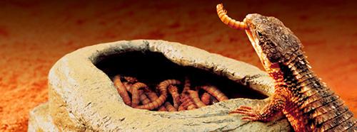 Comederos Exo-Terra Worm Dish para Alimento Vivo