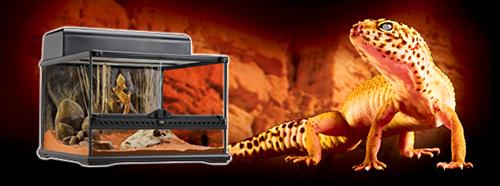 Kit Inicio Exo-Terra Gecko Leopardo