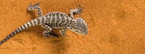 Exo-Terra Desert Sand