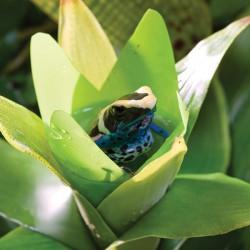 Bromelia de Exo-Terra - planta sintética para terrarios