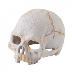 Exo-Terra Refugio Primate Skull para Terrarios