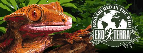 Exo-Terra Crested Gecko Kit